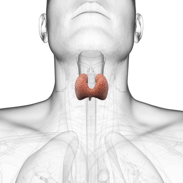 Kaip atskirti hipertireozę nuo hipotirozės: simptomai, diagnostika, gydymas | ingridasimonyte.lt