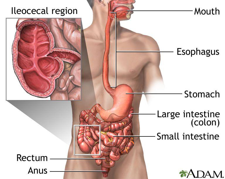 pierdere în greutate fără mișcare intestinală